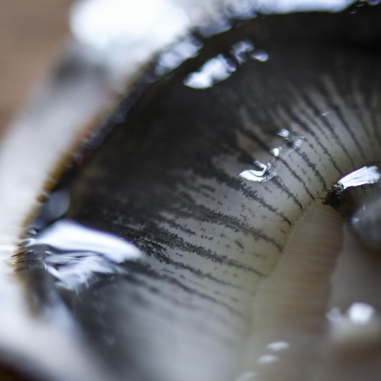 Dégustez les huîtres du Golfe du Morbihan